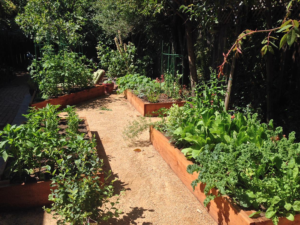 San Anselmo Organic Garden | Torres Landscaping Services